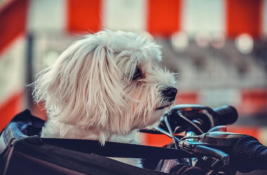 bolsos para perros pequeños, bolsos para perros amazon, bolsos para perros chihuahuas, bolsos para perros mini