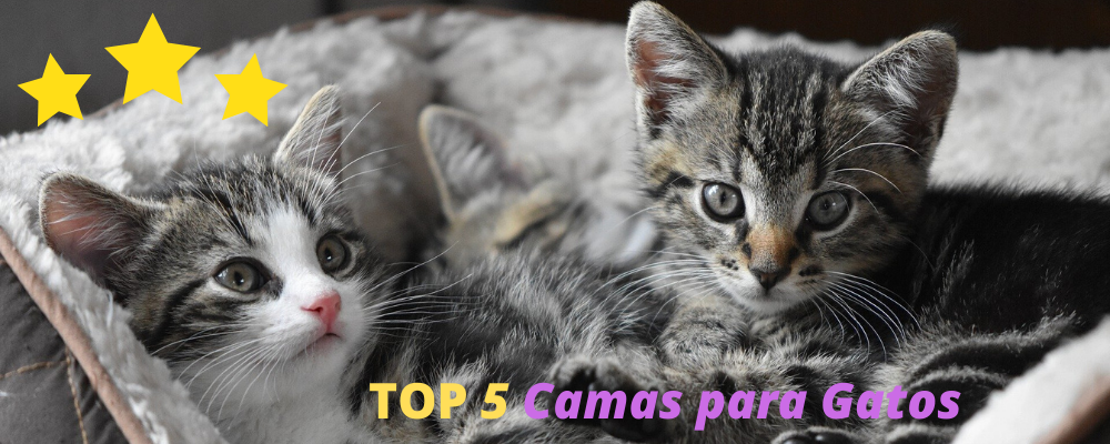 cojines redondos para gatos, hacer cojín para gatos, camas y cojines para gatos, cojines para gatos Amazon, cojines de gatitos, camas para gatos baratas online